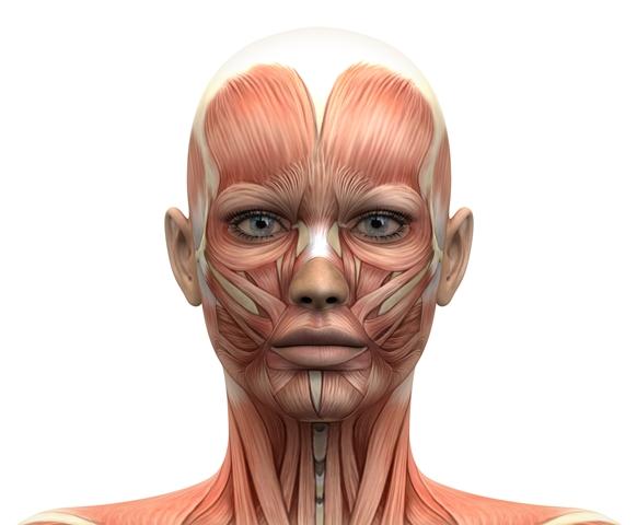סדנא לשיקום שרירי הפנים