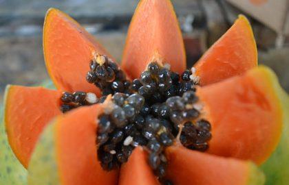 פאפיה (זרעים)
