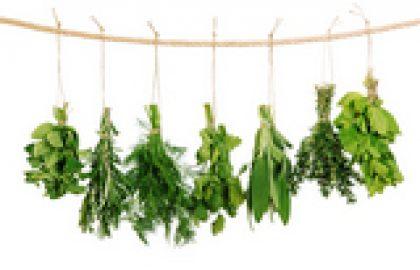 """צמחי מרפא ע""""פ השיטה הגרמנית המסורתית"""